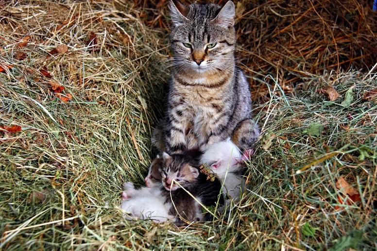 cat-1291725