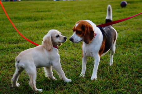 two-dogs-on-lead